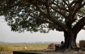 India 25 November 2013